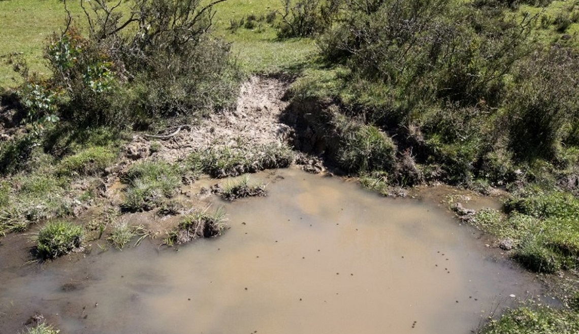 Suspended mud and poor water quality due to feral horse damage, Cowombat Flat, Alpine National Park.