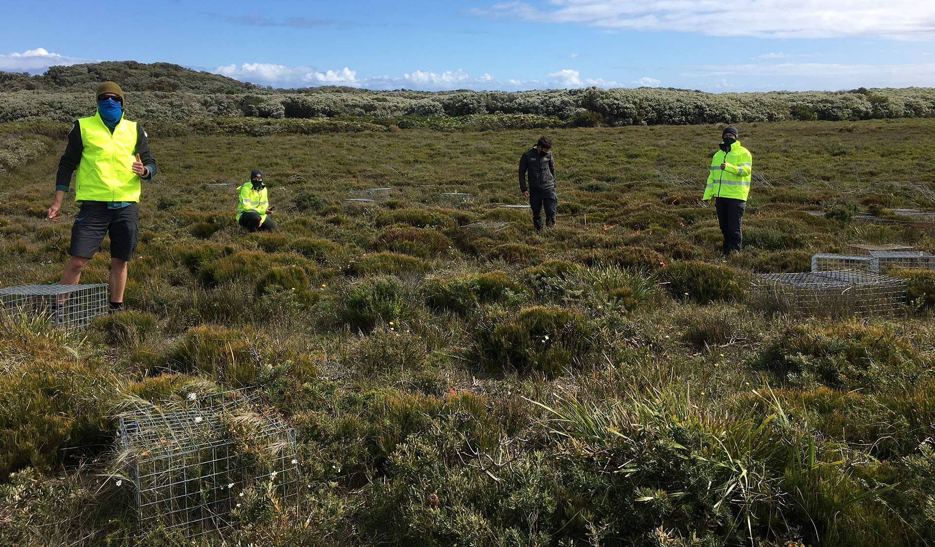Parks Victoria staff in face masks and high-vis in a shrubby field, with cages around threatened Eastern Spider Orchids.