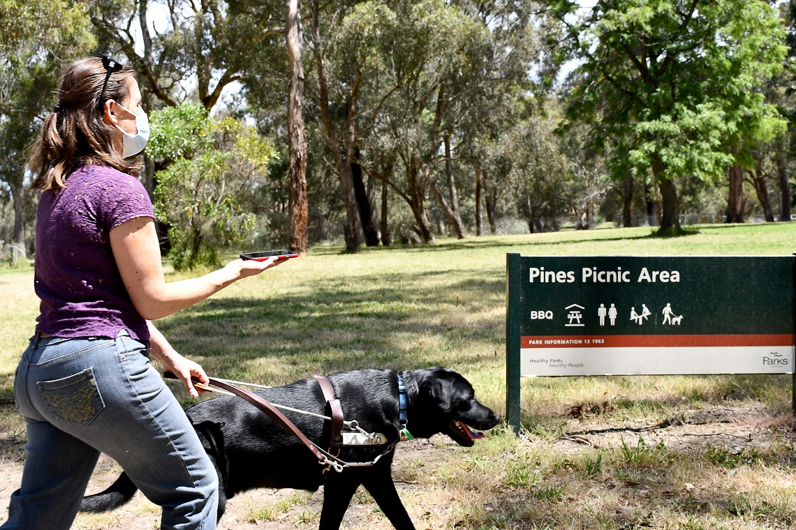 A woman wearing a face mask walking with an assistance dog, holding her mobile phone, in front of a sign that says .Pines Picnic Area.