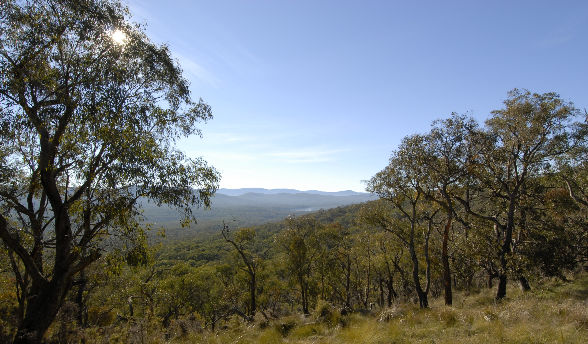 A view of Bunyip State Park