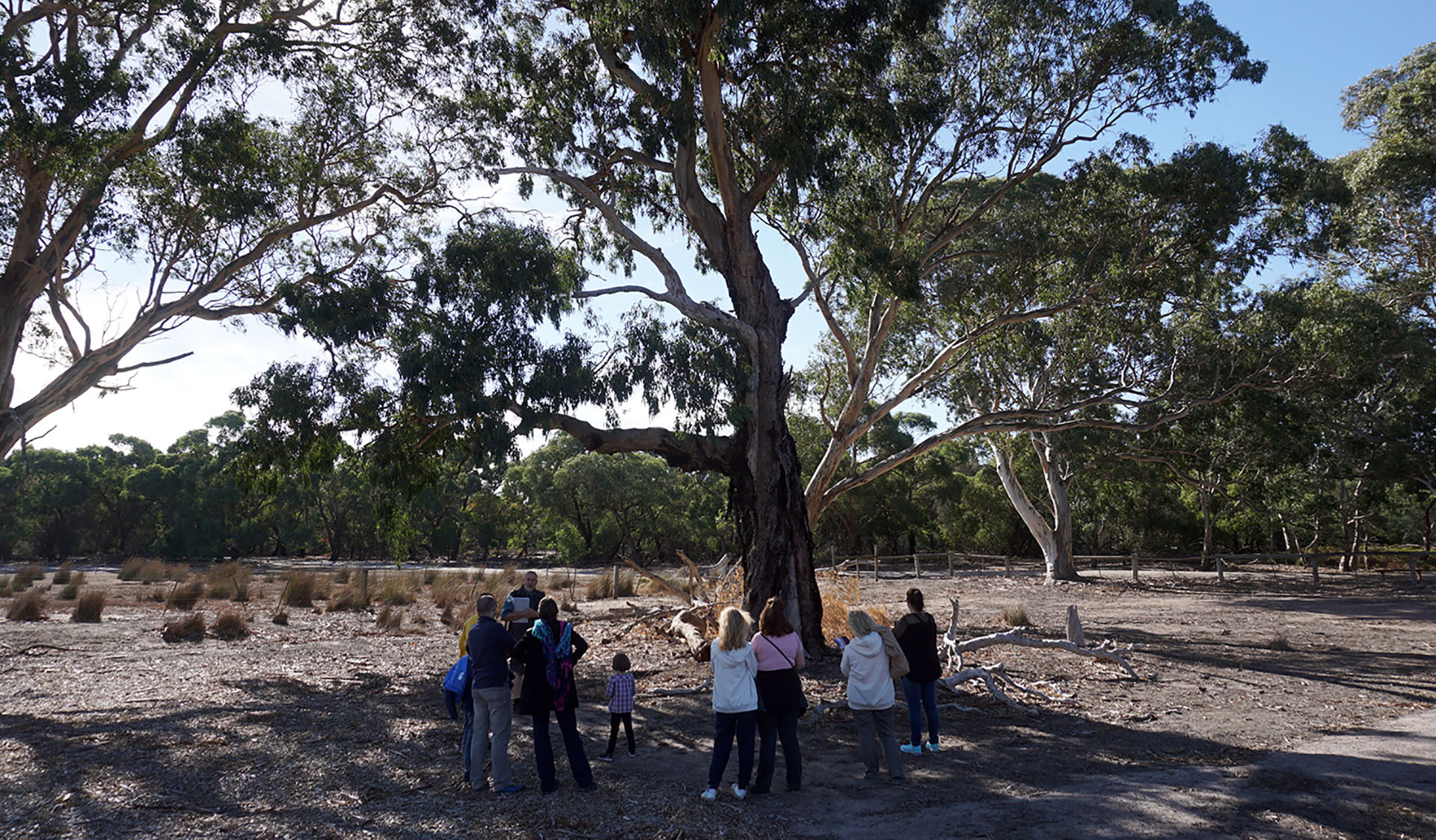 A ranger with a group of people in the shade of a tree at Braeside Park