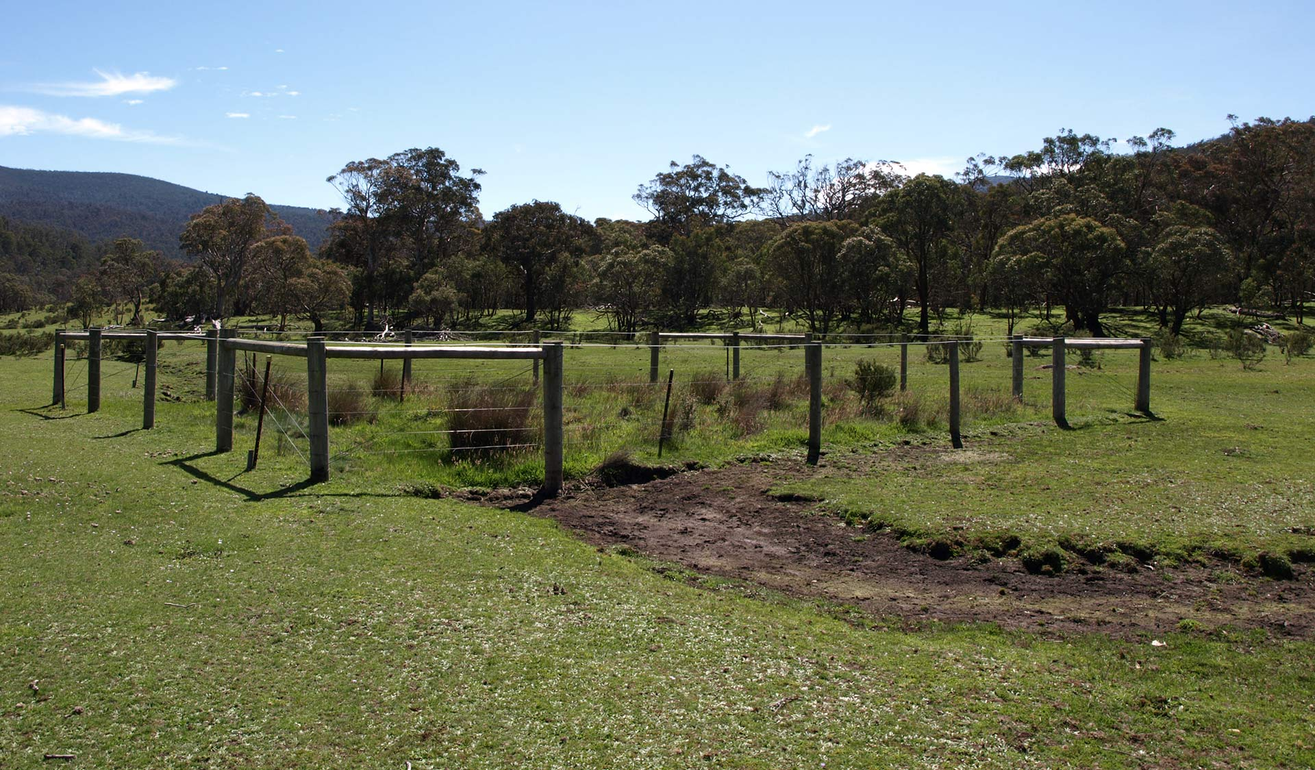 Exclusion plot in Alpine National Park showing intact native vegetation inside fence and feral horse impacts outside fence