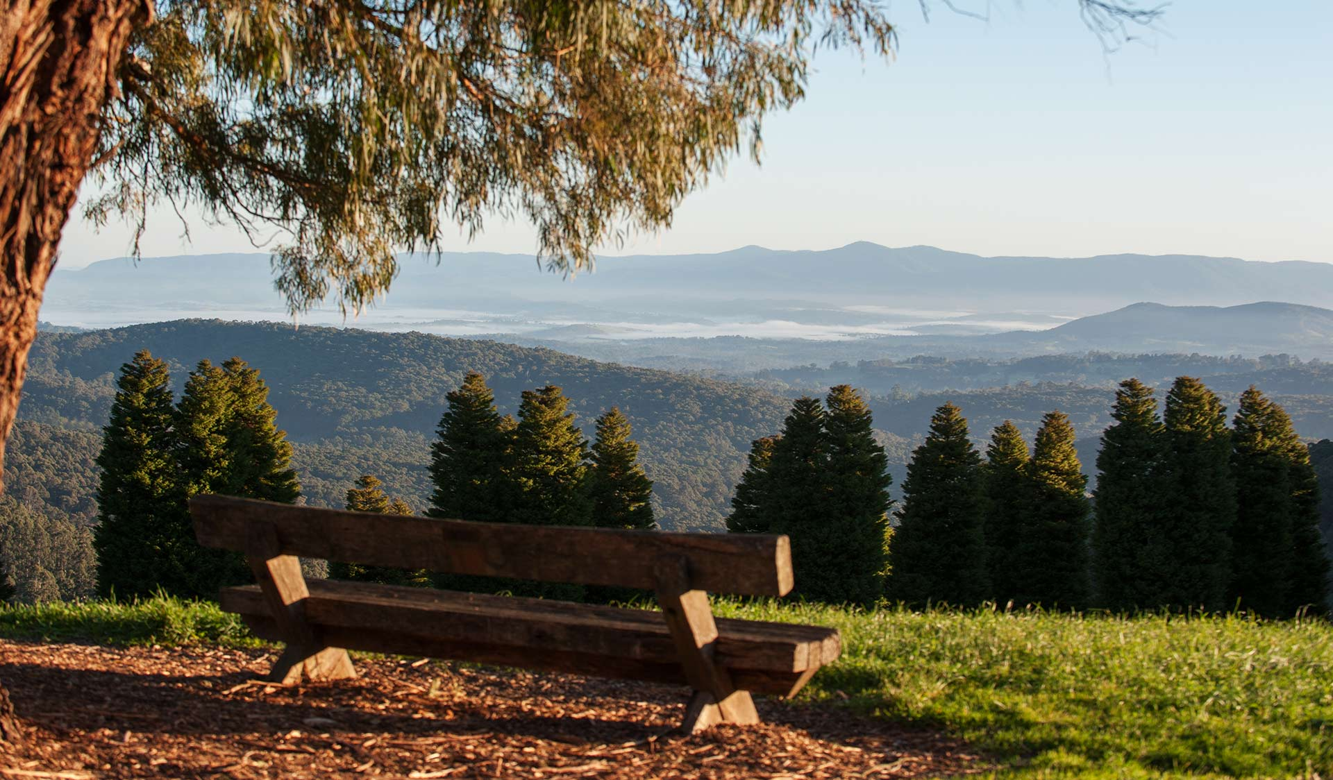 The view from the RJ Hamer Arboretum in the Dandenong Ranges National Park.