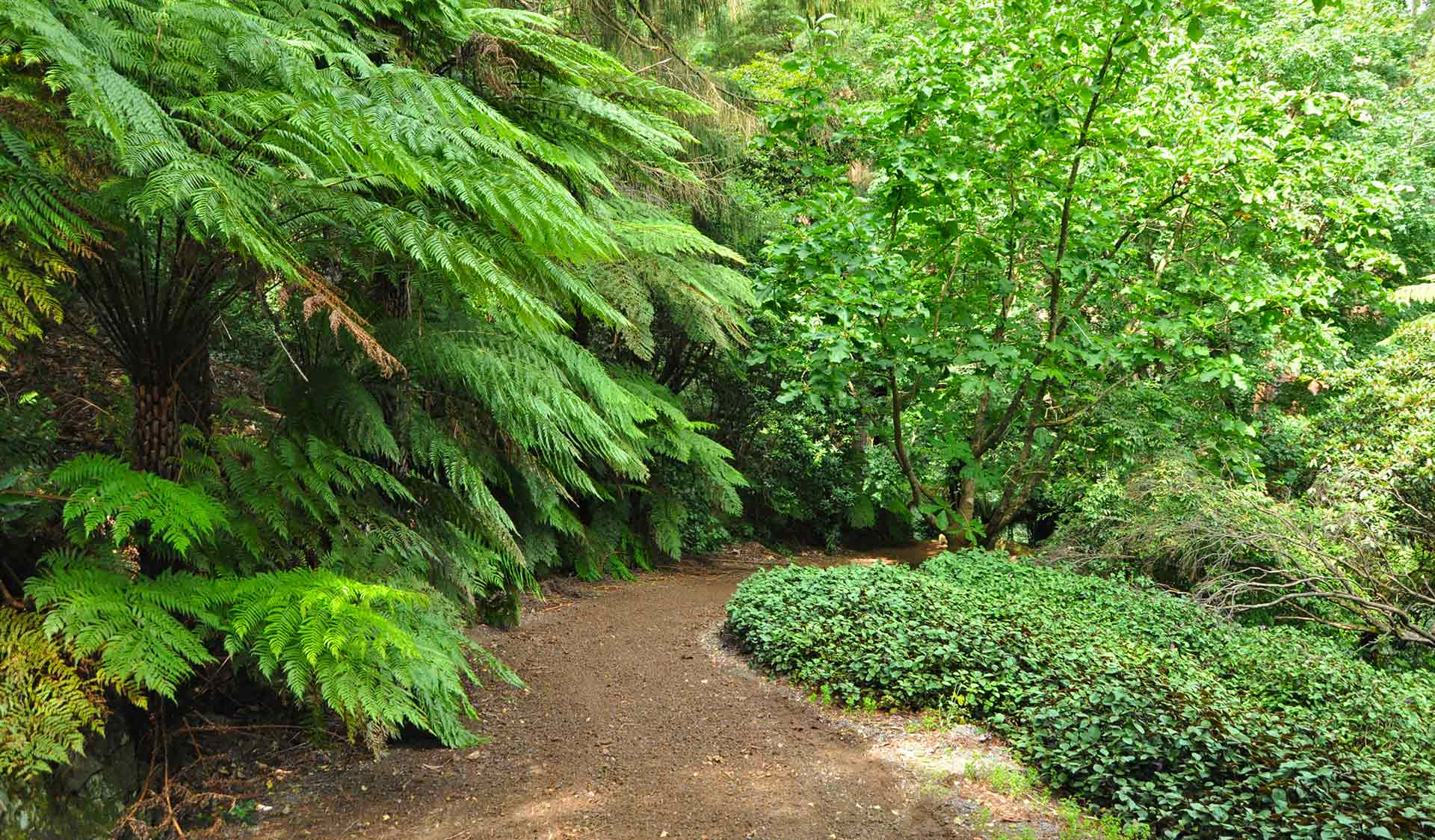 A path in Pirianda Garden in the Dandenong Ranges National Park.