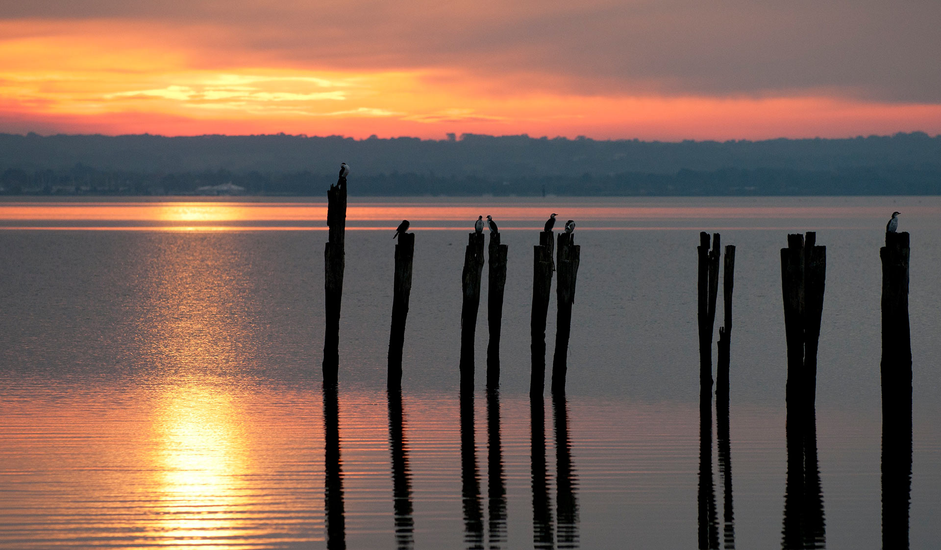 Sea birds sit upon the remnants of the old jetty at French Island while the sun sets below the horizon.