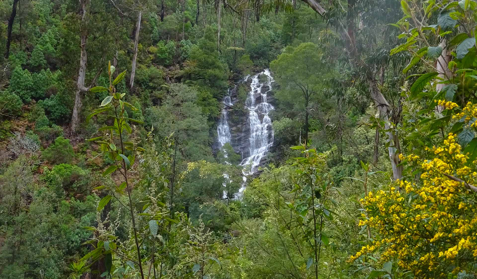 Wombelano Falls in the Kinglake National Park