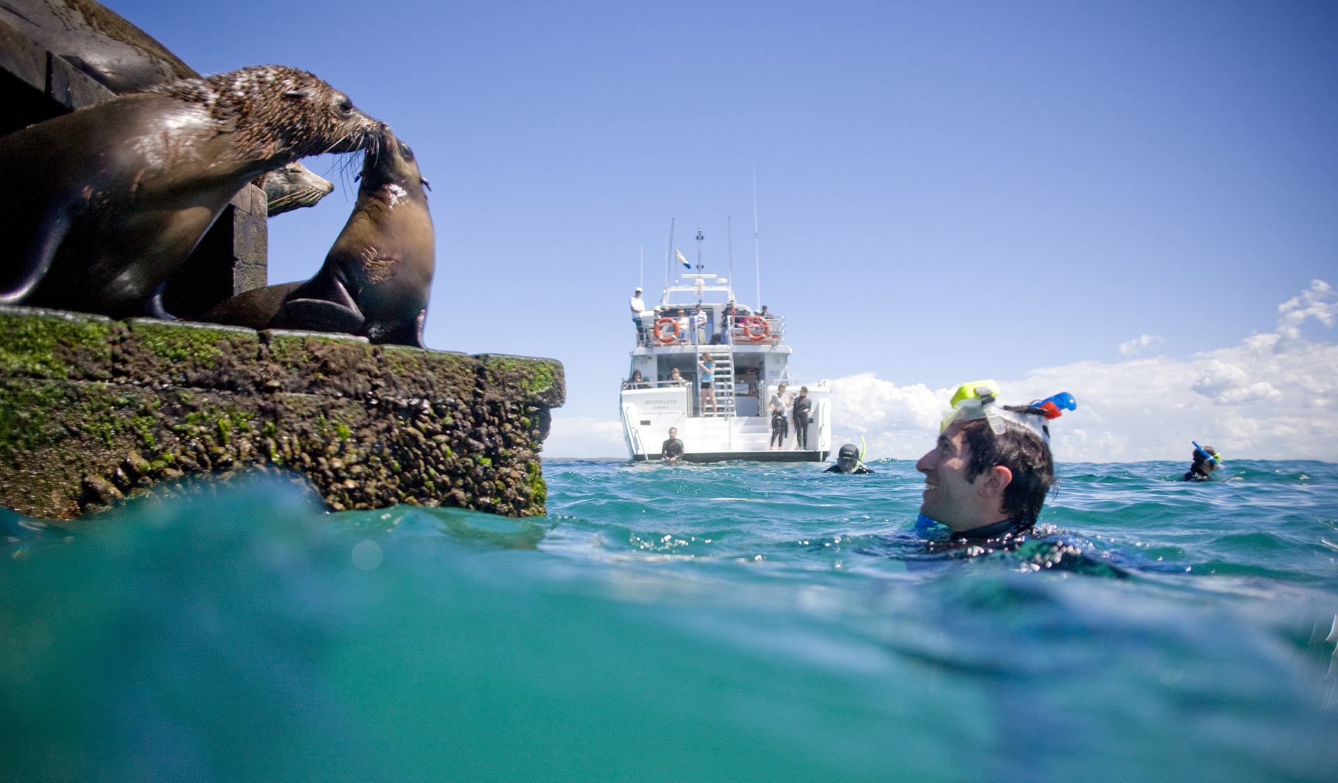 A snorkeler has a close encounter with a pair of seals at Chinamans Hat in Port Phillip Marine National Park.