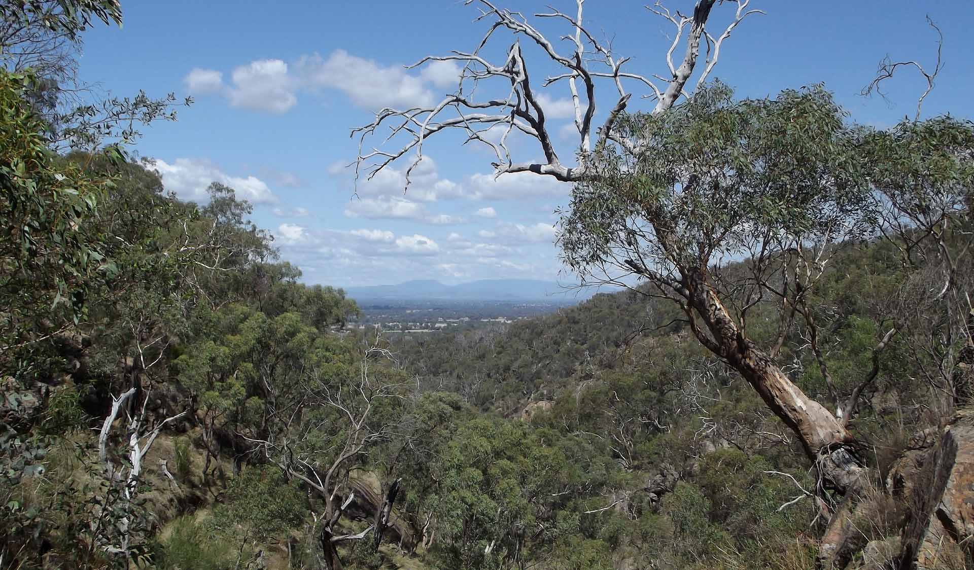 Mountain views to the east of the Warby-Ovens National Park