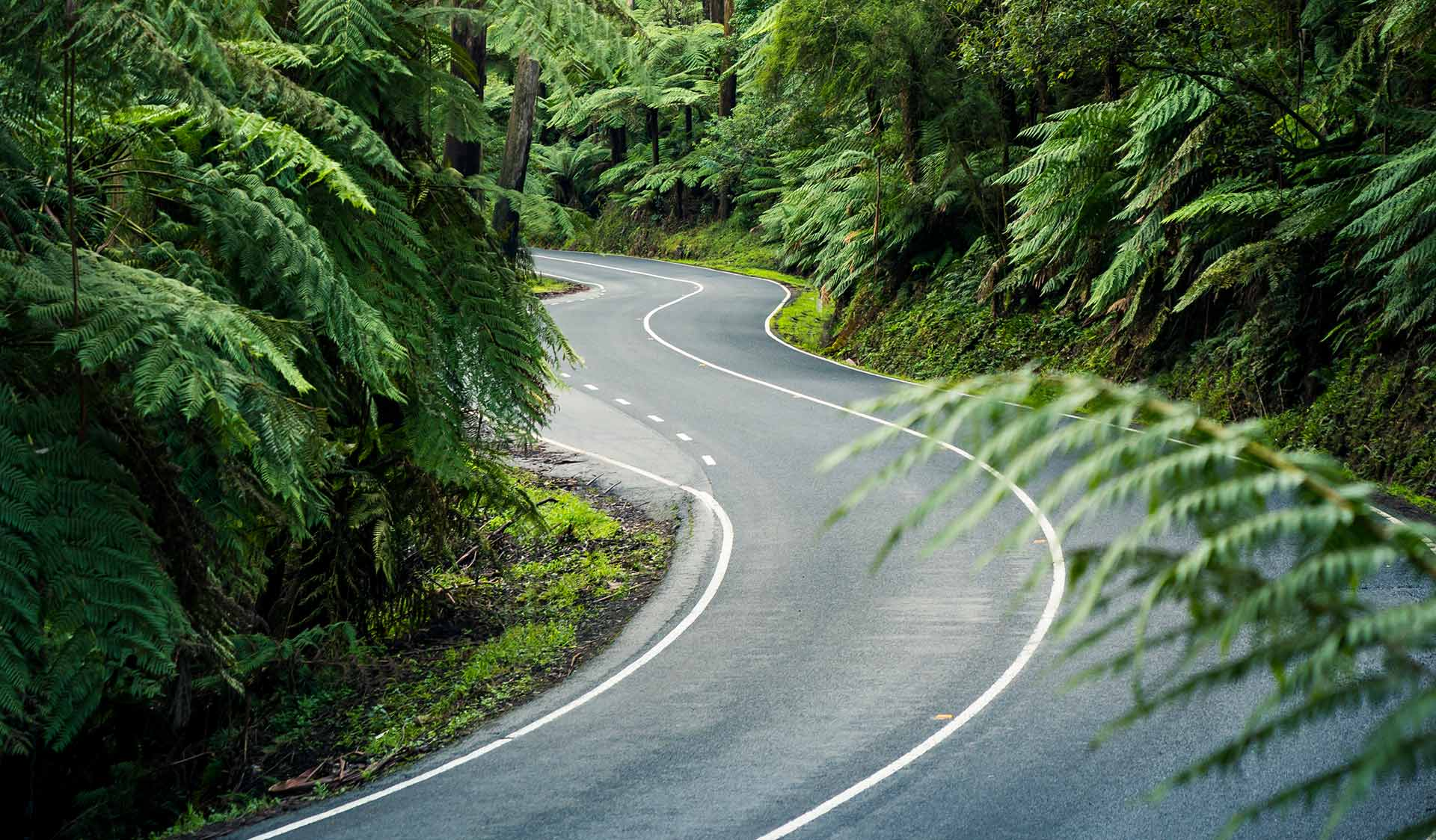 A road winds through a lush temporate rain forest.