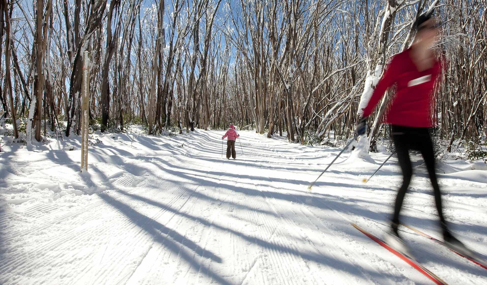 An experienced cross-country skier skis past a small child learning to ski on a maintained path.